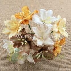 Kwiatki, W.O.C. lilie mix brązowych , 5 szt.