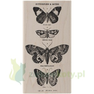 Stempel gumowy na bloczku Stampers Anonymous - Motyle i ćmy (Tim Holtz Collection)